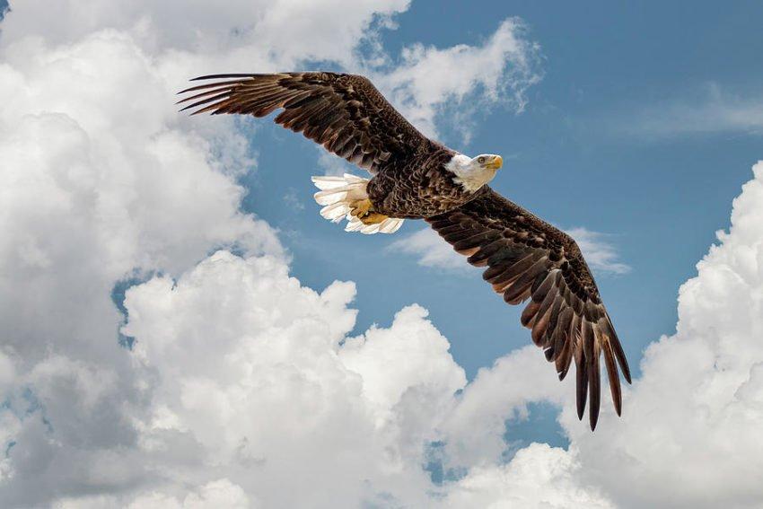 Вчіться парити над бідами та невзгодами, як орел