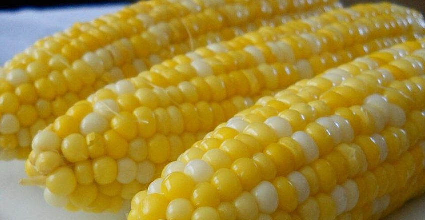 Як варити кукурудзу правильно: секрет на все життя